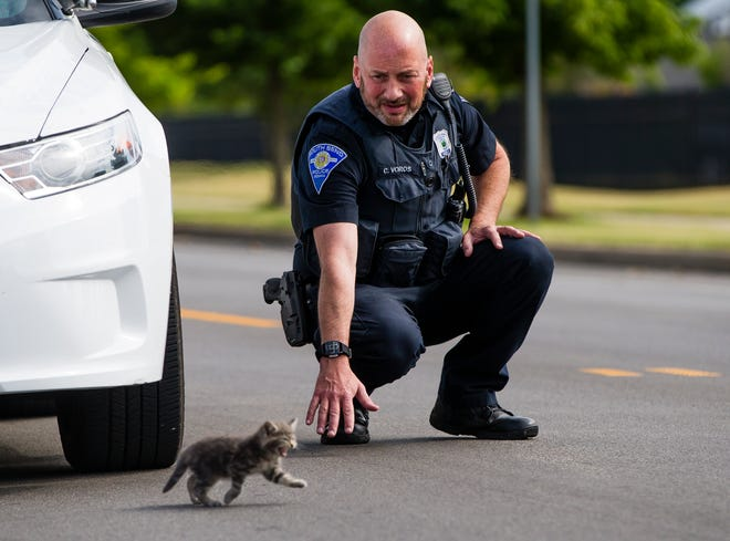 South Bend Police Officer Chris Voros works to corral the kitten that had crawled underneath his cruiser.