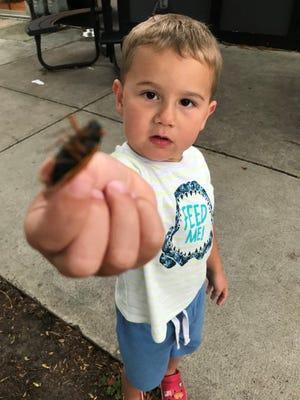 Roman Williams, 4, holds his last Brood X cicada on Monday, June 21, 2021.
