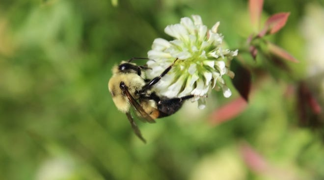 A recent study from Rutgers University indicates pollinators contribute $50 billion per year in the US alone. By getting creative with cover crop integration and management on land with low productivity, agricultural producers can provide beneficial habitats for pollinators.