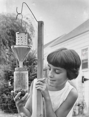 Michele Musarraは1961年7月Akronで日本カブトムシトラップの内容物を確認します。