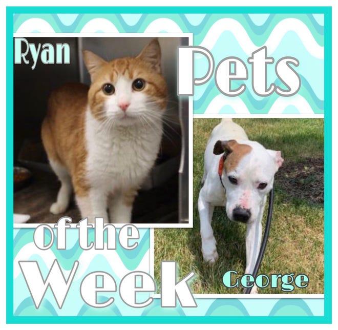 Pets of the Week: Ryan & George https://www.burlingtoncountytimes.com/story/lifestyle/2021/06/25/pets-week-adopt-senior-dog-ginger-cat/7723479002/