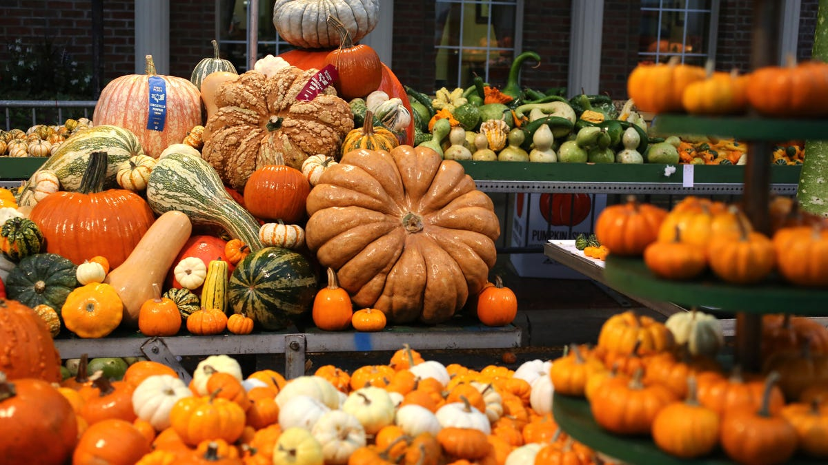 You heard it right: The Greatest Free Show On Earth (The Circleville Pumpkin Show) is back