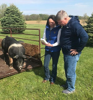 Liane Hart, CEO and co-founder of Verility LLC, and Jeff Muegge, research manager at Blue River Research Services in Carthage, Indiana, review results from a semen analysis sample on the Fertile-Eyez technology platform before artificial insemination of a sow.