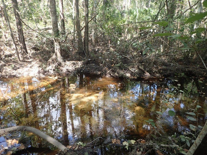 This patch of land was part of 10 acres the North Florida Land Trust transferred for an expansion of  Jacksonville's McGirts Creek Parkin 2017. Another 61 acres are being added now through donations of three separate parcels abutting the Westside park.