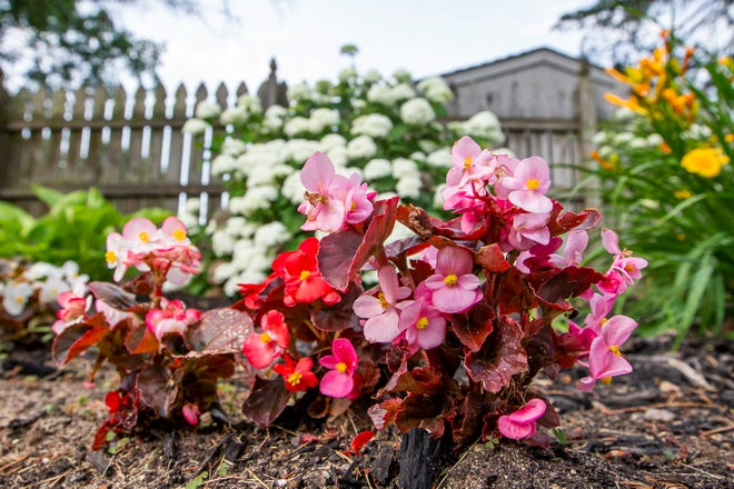 Flowers bloom at the home garden of Becky Bartlett and Mike Oliva on June 24 in Mishawaka. The location will be part of an event for the South Bend Museum of Art in which artists paint in people's home gardens while attendees tour the gardens.
