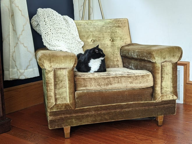 Abbey got a mixed response after sharing her new purchase, Patricia, the chair. She is still happy to have given the piece of furniture a new home.