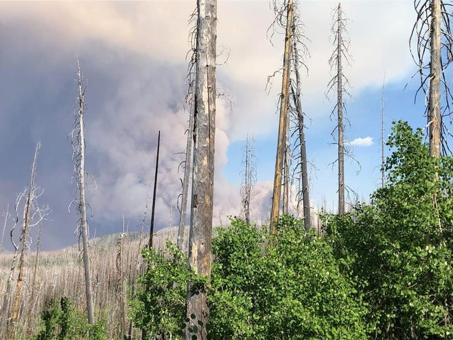 A view of the Johnson Fire in the Gila National Forest from Crest Trail June 12, 2021.