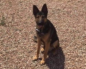 Tisha-Monique Peña penned a social-media post to a community Facebook group after she and a friend grew concerned for the well-being of a neighbor's dog. The neighbor responded, and Duke the German Shepherd has now been re-homed.