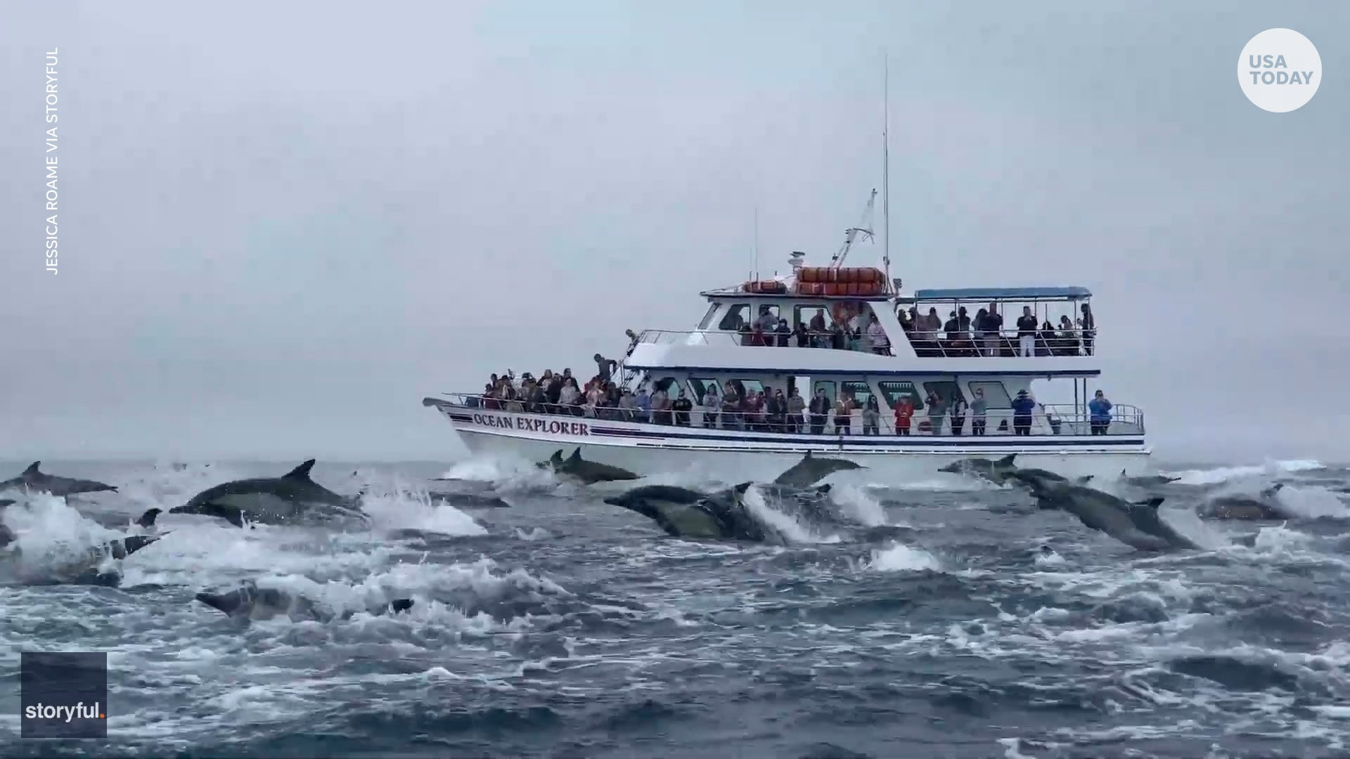 Hundreds of dolphins surround whale-watching boat in California