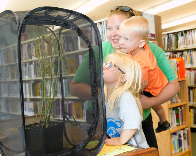 Nicole Brock, with Paisley, 4, and Waylan, 3, of Clayton, look at the two chrysalises that will soon be monarch butterflies at the Lenawee District Library in Adrian.