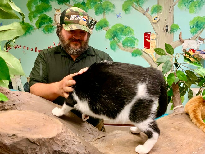 """Maury County Animal Services Director Jack Cooper interacts with cats in one of the facility's """"open roam"""" rooms, which were added after Cooper became director in 2019."""