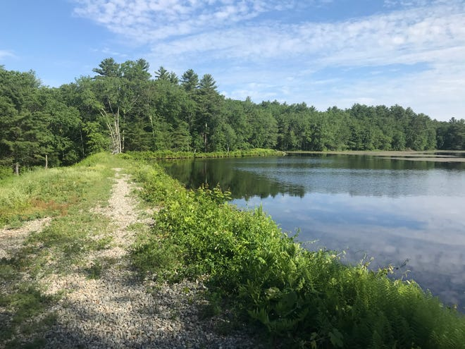 The northern half of the 10-acre Hawkins Pond in Glocester is covered with lily pads.