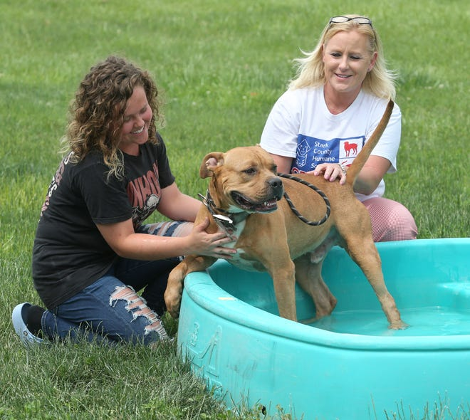 Hailey Ohm plays with Dozer in a wading pool as Jackie Godbey, executive director of the Stark County Humane Society, looks on. It is their way of keeping canines cool this summer.