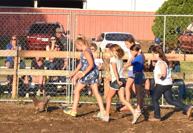 Five girls go on a wild goose chase — oops, chicken chase — during family night activities on Wednesday, June 23, at the Henry County Fair in Cambridge. Officially called a chicken scramble, the event was in the horse arena on the north side of the fairgrounds.