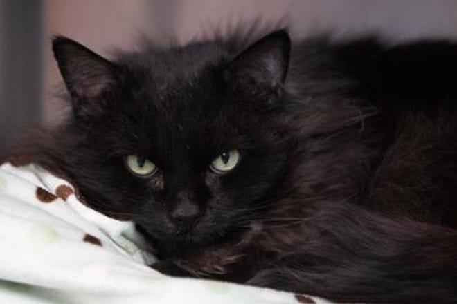 Corrie is available for adoption through WARL.