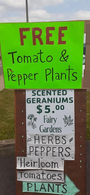 Paul Carmichael has signs detailing the offer of free plants at his Alliance business.