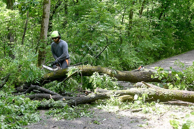 Macaulay Stubbs, a forester with the Columbia Parks and Recreation Department, cuts tree limbs Monday that fell across the MKT Trail over the weekend following thunderstorms. Workers are clearing the trail between the Forum Boulevard entrance and the Martin Luther King Memorial entrance.