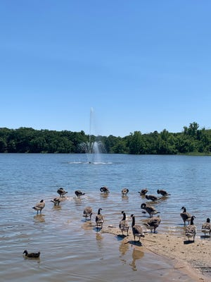 The city of Denison has repaired and reinstalled the fountain at Waterloo Lake after nearly seven years of disuse.