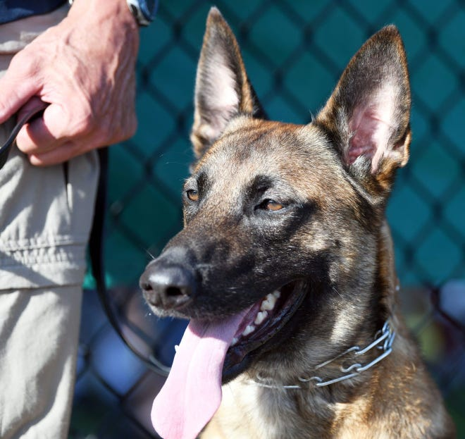 A bill that would allow emergency personnel to treat and bring police dogs to an animal hospital is named in honor of Yarmouth police dog Nero, who was injured when his handler,Sgt. Sean Gannon, was killed in a 2018 shooting.