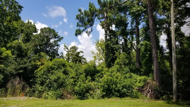 The New Hanover Sheriff's Office investigated a murder in the woods behind the Cape Fear Plaza