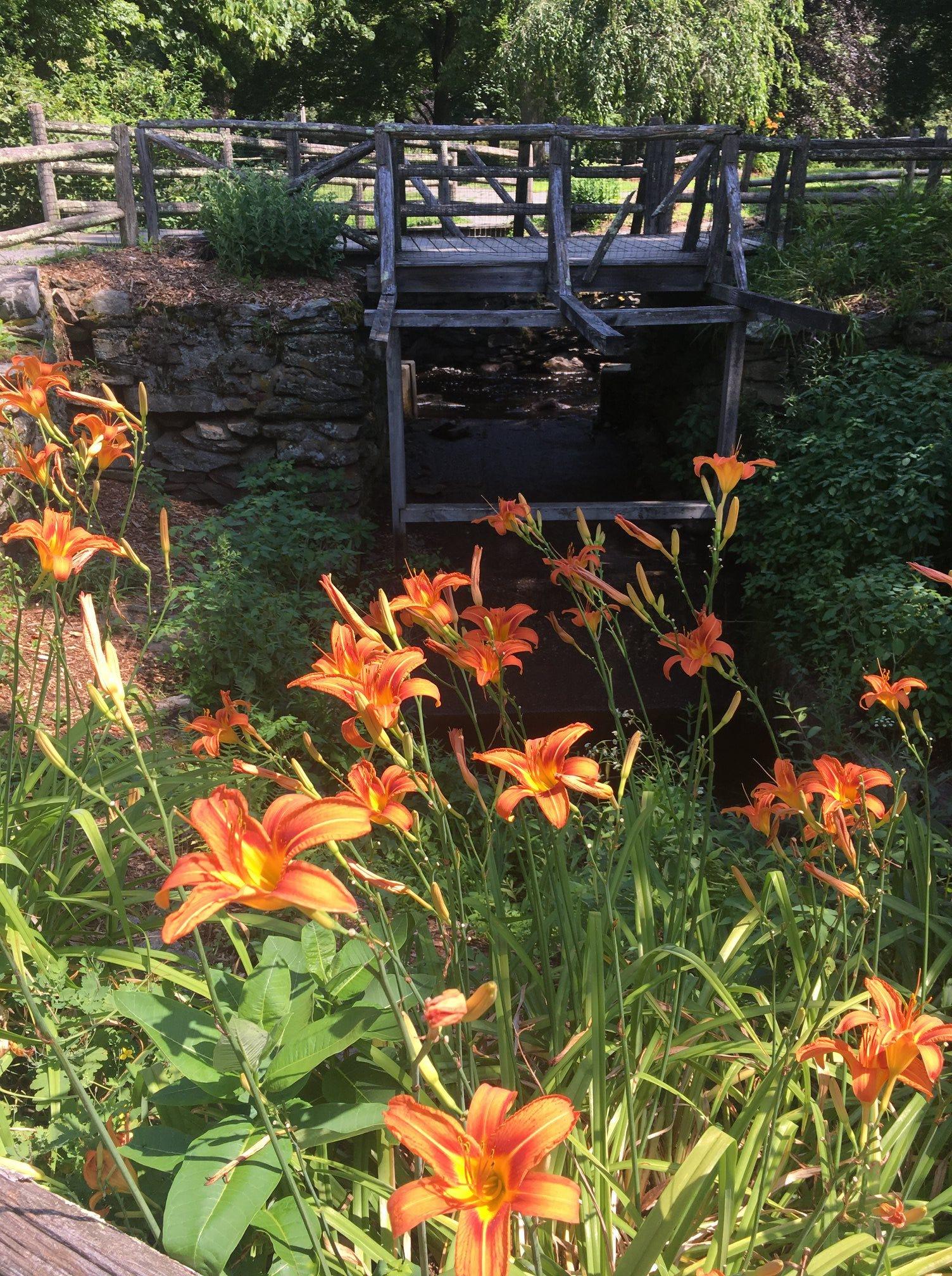 Bay Circuit Trail flora.