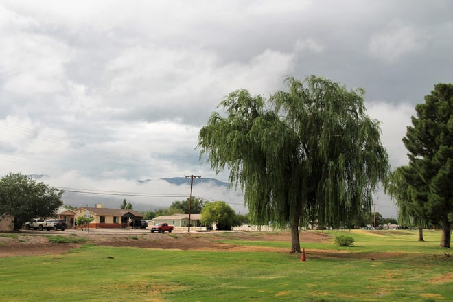 A weeping willow at Kids Zone droops lazily in the humid air between rainstorms while a rain clouds hover on the Sacramento Mountains on June 28, 2021.