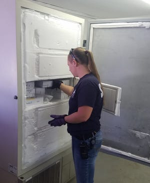From whole blood to serum to animal feces to tissue samples and more, Veterinary Technician Allyssa Roberts requires the ultra-low freezer for many reasons.