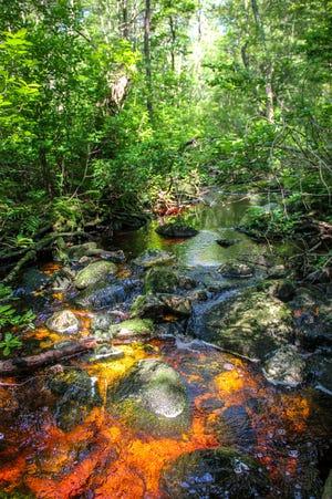 FREE HORROR a997a92c-b4e0-43d1-b2c5-6596b5a5ed29-0629_fr_dm_bioreserve_6 Fall River Bioreserve's true story