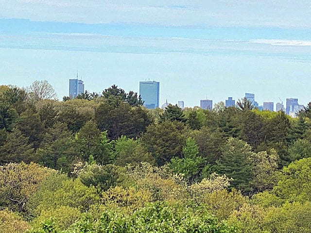 This is the Boston skyline as seen from the Arnold Arboretum.