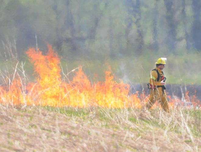 Here is what a prescribed burn at the Ganondagan State Historic Site looked like in a field near Murray Road, Victor. Another burn is planned for later this summer.