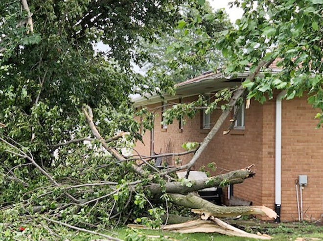 Tree damage is shown near a house in Chatsworth after a possible tornado blew through the community Saturday afternoon.