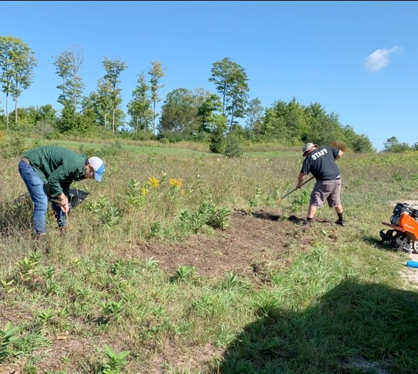 Michael Hindy, with Three Shores CISMA, and Ken Kerkhof, with Northern Natives Erosion Control, working to eradicate spotted knapweed along the Zellar Trail in Newberry.