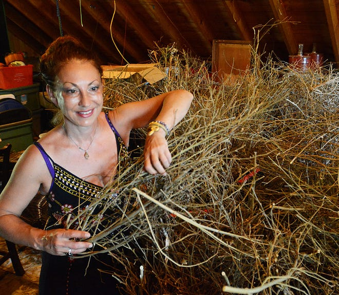 Dr. Stefana Pecher, director of Better Together CT, talks about the many uses for hemp stalk Tuesday at her North Stonington hemp farm.