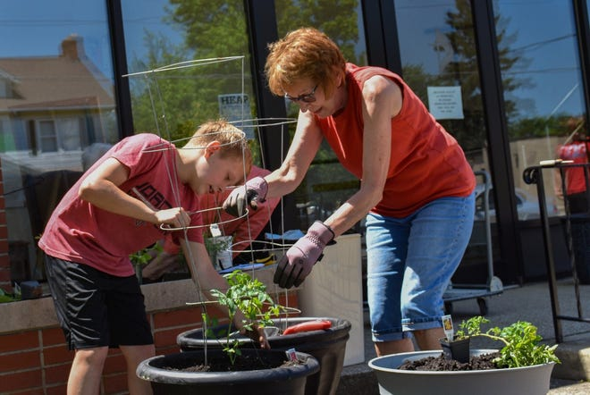Volunteers stake tomato plants at the Green Springs Community Garden on June 14. The driving forces behind the project are two area churches.
