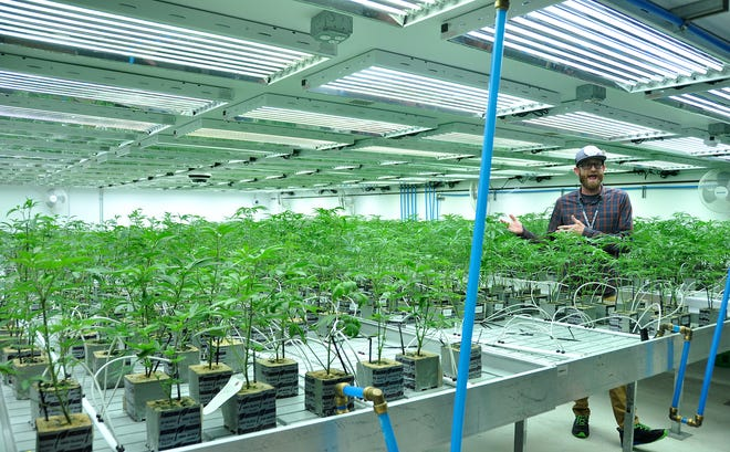 Jonathan Hunt gives a tour of the Native Nations Cannabis facilities on the Flandreau Santee Sioux Tribe reservation.
