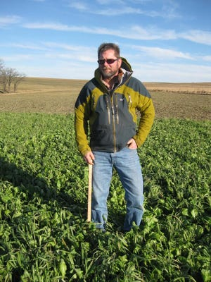 Photo taken on Dec. 1 of stockpiled cover crop for grazing.Dec. 1