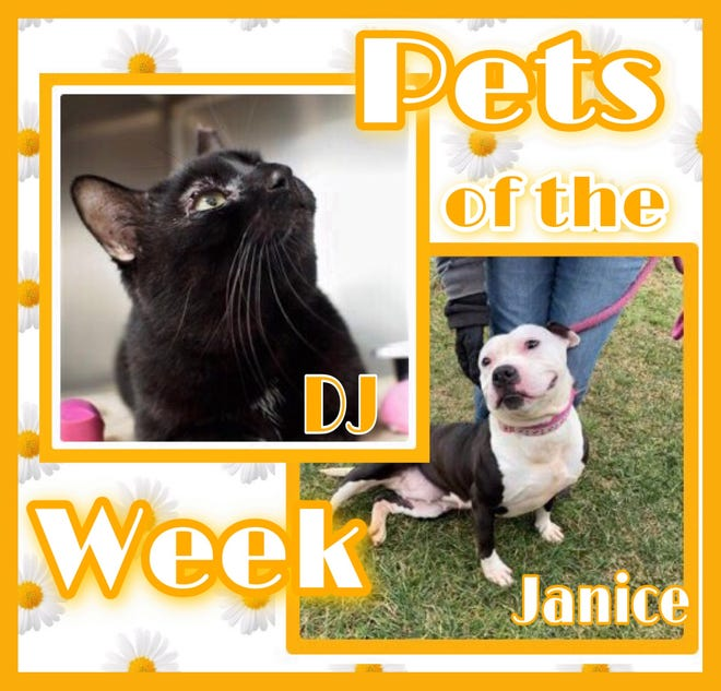 Pets of the Week: DJ and Janice https://www.burlingtoncountytimes.com/story/lifestyle/2021/07/02/pets-week-adopt-attention-loving-black-cat-smiley-snuggly-dog/5330088001/