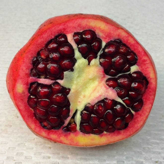 Research is being conducted on growing pomegranates in Florida