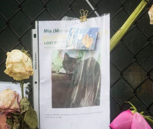 A photo of Mia, a cat that is missing in the Champlain Towers south condo collapse