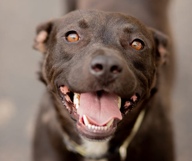 Morticia, a 2-year-old mixed breed, is available at EGAPL The Heart of RI Animal Rescue League, in Cranston.