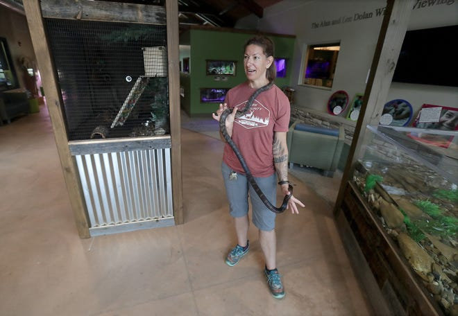 Talula Wiater, natural resources manager at the Stark Parks' Wildlife Conservation Center, shows off a black rat snake named Indiana on Wednesday as park workers prepare for the facility's inside reopening. The interior of the wildlife center in Perry Township reopened Thursday after a more than 15-month shutdown due to COVID-19.
