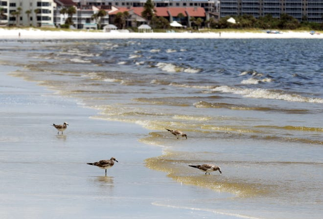 This 2018 file photo shows red tide at Siesta Beach.