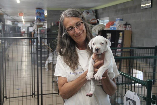Rescue Rance volunteer Laura Finley holds a puppy called Ash by his rescuers, who found in the Lava Fire evacuation area. He had burnt paw, singed fur and suffered injuries to his lungs from smoke and heat. He was the only survivor of a litter of puppies.