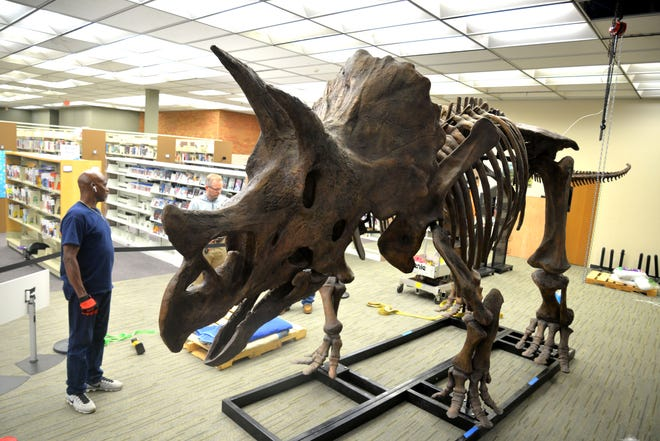A triceratops cast skeleton is now on display at the Waynesboro Public Library. The display is on loan from the Virginia Museum of Natural History.