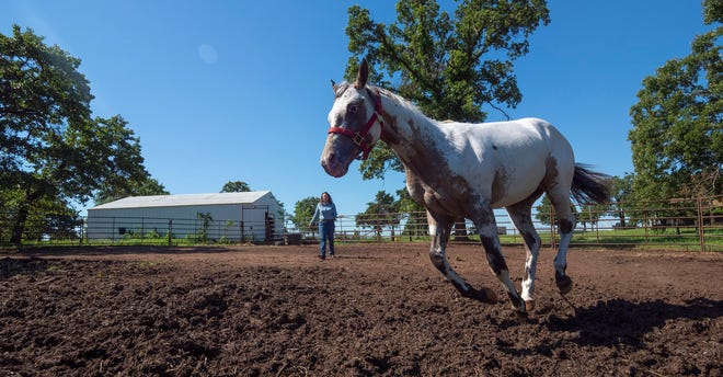 Happy horses are engaged with life going on around them. They are active members in their social groupings and attentive to, and eagerly willing to, explore their environment.