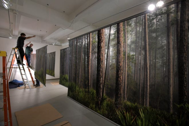 """Large transparency panels depicting stands of pine trees and palmettos in Austin Cary State Forest are hung in one of the galleries at MOCA Jacksonville as part of photographer Doug Eng's new exhibit. """"Structure of Nature/Nature of Structure"""" will be at the museum through January."""