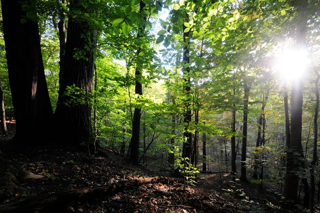 Dark and quiet, the deep woods in the Cuyahoga Valley offer a great place to get out in nature.