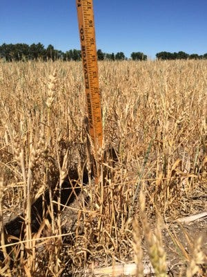 Drought can be stressful for farmers and ranchers.