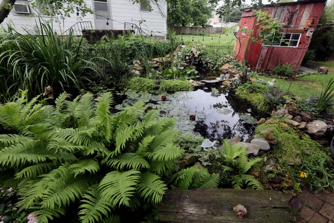 A pond in Bill and Pam Taylor's garden June 29 at 827 S. Garfield Ave. in Burlington. The Taylors' garden is one of five that will be featured in a Garden Tour offered by the Preservation Station. The self-conducted tour will run from 10 a.m. to 4 p.m. on Saturday.
