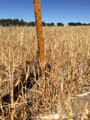 If you poll corn and soybean producers across the Corn Belt regarding the condition of the 2021 crop, you will probably get a variety of responses.